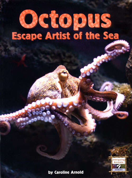 Octopus, Escape Artist of the Sea